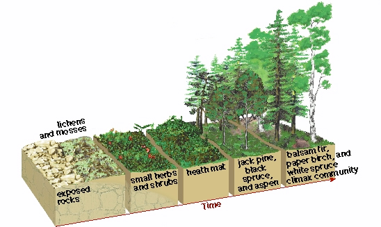 ecological succession in tropical rainforest and